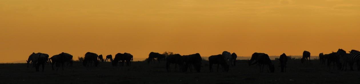 """Kenya 2014 - """"Je vous souhaite des rêves à n'en plus finir et l'envie furieuse d'en réaliser quelques uns."""" Jacques Brel"""